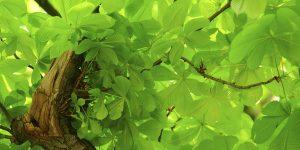 Baumkrone mit Blättern