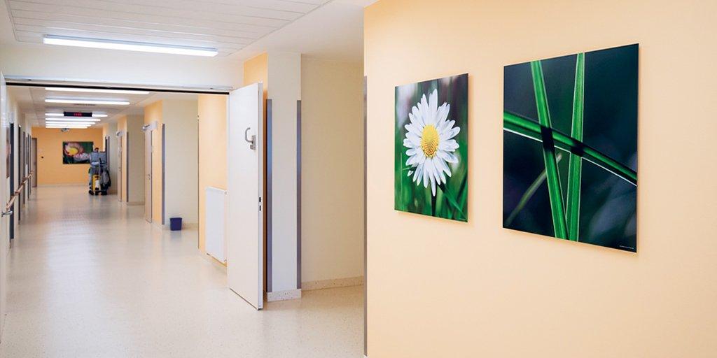 Fotodrucke Margerite und Gräser für Krankenhausflur