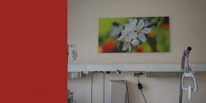 Fotodruck für Patientenzimmer