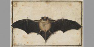 Albrecht Dürer, Fledermaus,© Besançon, musée des Beaux-Arts et d'Aechéologie – Foto: Pierre GUENAT