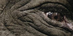 Douglas Gordon, Play Dead; © Studio lost but found / VG Bild-Kunst, Bonn 2017